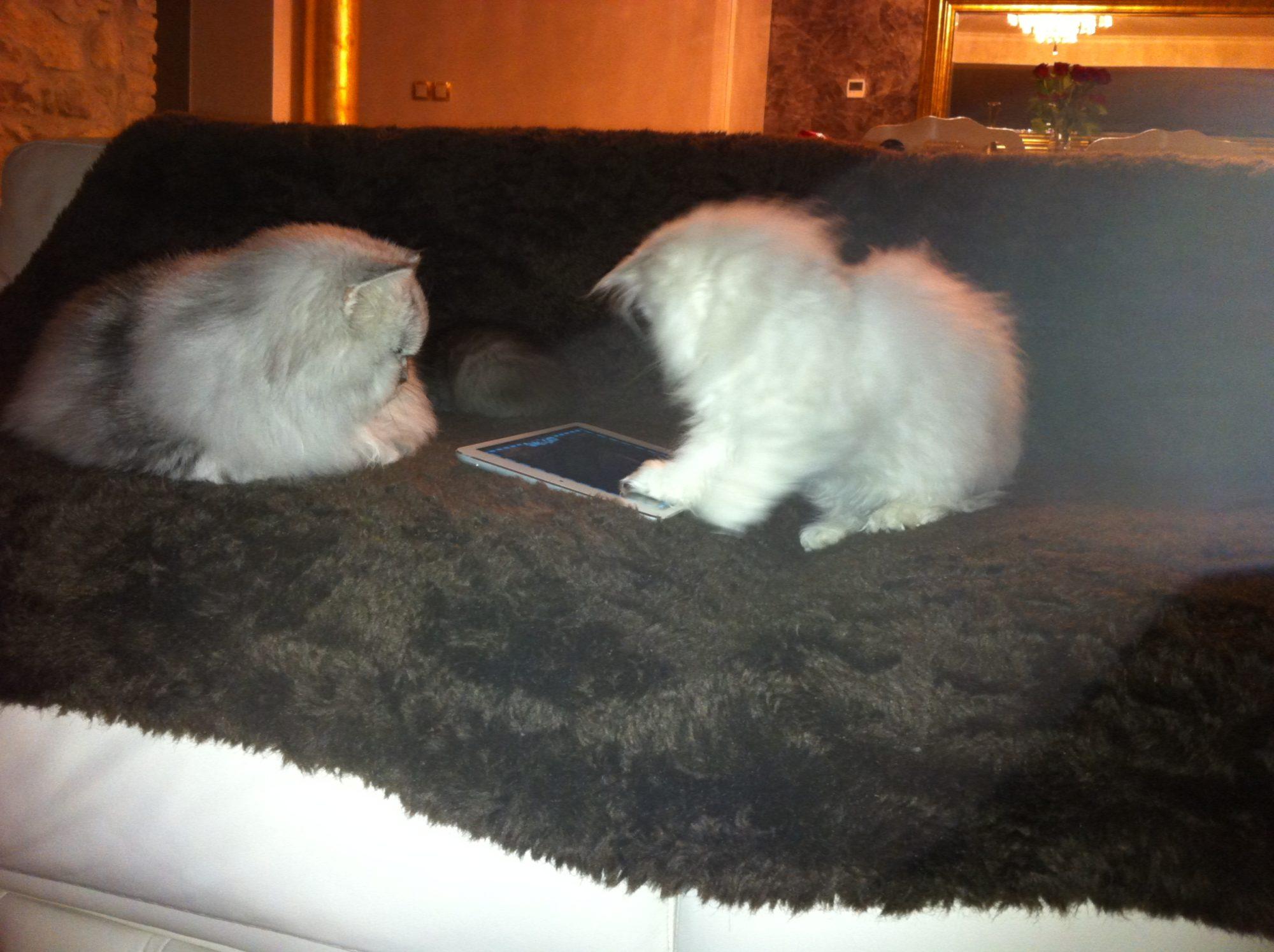 ancien-chaton-minipoupette