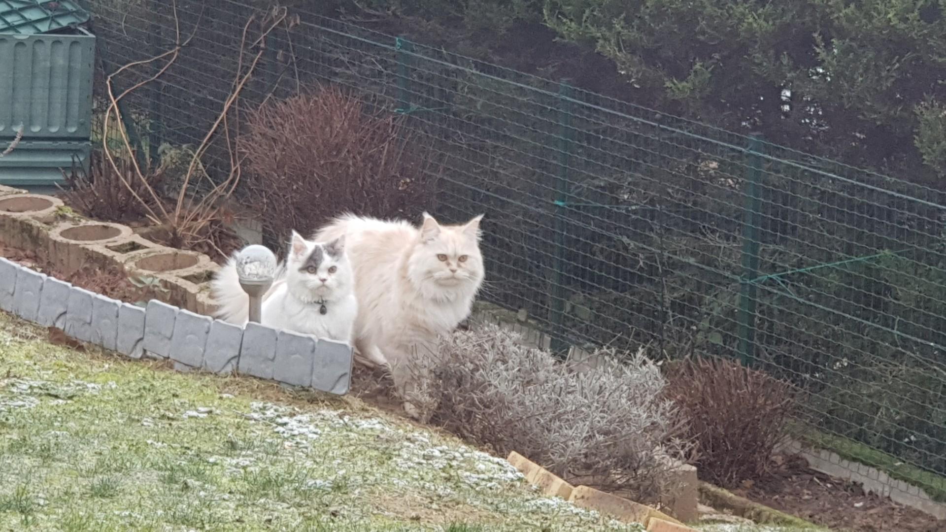 Asgard - ancien chaton - Sunday et Oreo