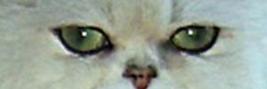 yeux-vert